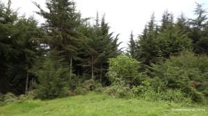 Kereita Forest
